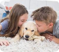 Bonusbarn och husdjur – vilka ingår i försäkringen?